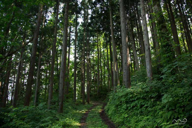 【壁紙】小沼神社参道
